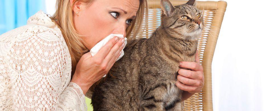 Katzenhaarallergie: 6 Tipps, um Beschwerden zu lindern
