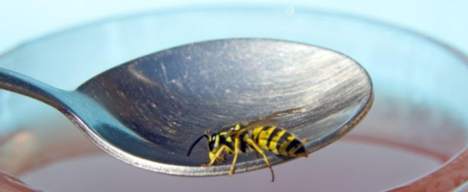 Insektengiftallergie: Wann Insektenstiche gefährlich werden