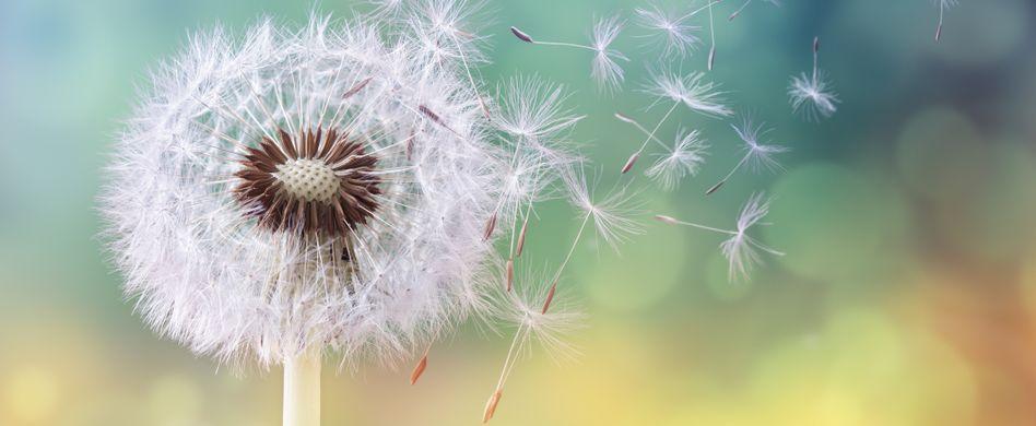 Allergien vorbeugen - das können Sie tun