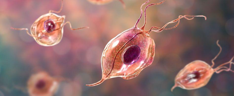 Parasiten beim Menschen: Was krabbelt, pikst und beißt denn da?