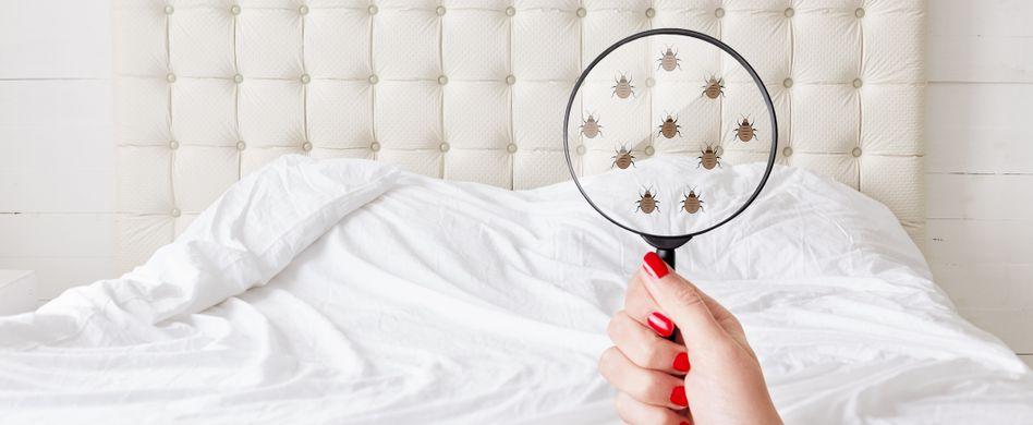 Bettwanzen bekämpfen: So werden Sie die Schädlinge los