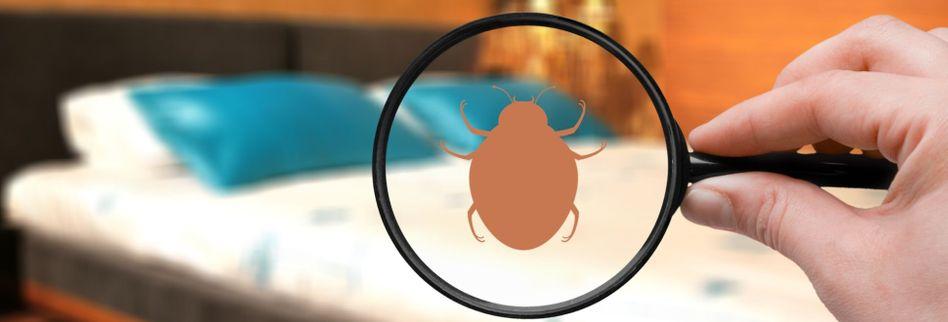 Bettwanzen erkennen: 5 Anzeichen für den Parasitenbefall