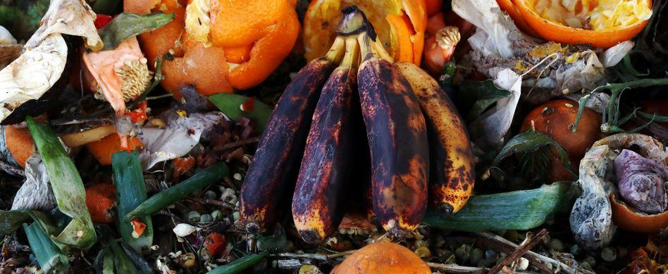Endlich weniger Lebensmittel wegwerfen: So viel Essen landet in der Tonne