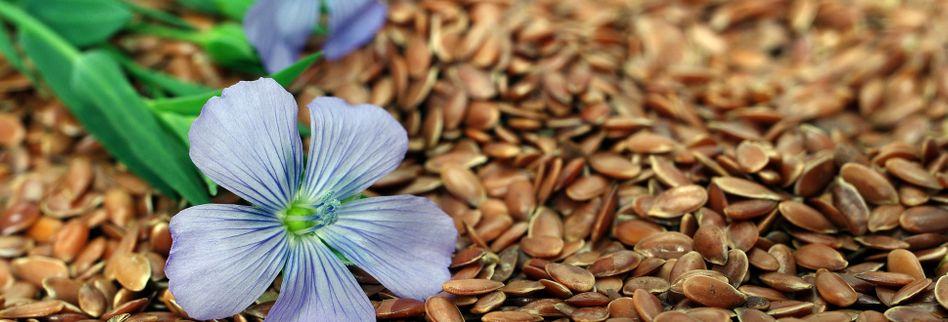 Leinsamen: Wirkung und Anwendung bei Verdauungsbeschwerden