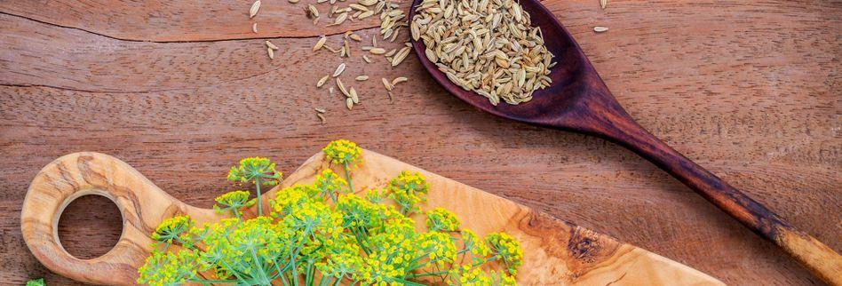 Fenchel: Wirkung der Heilpflanze auf die Verdauung
