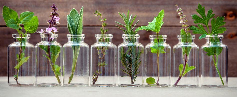 Heilpflanzen gegen Demenz: Diese natürlichen Mittel helfen, das Gedächtnis zu erhalten