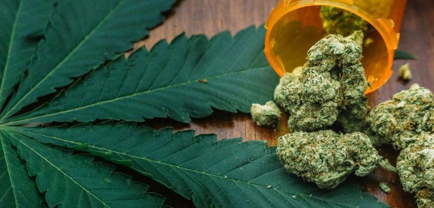 Haschisch Marihuana Unterschied