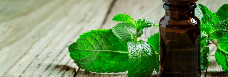 Heilpflanze Pfefferminze: Wirkt entkrampfend und hilft bei Reizdarm