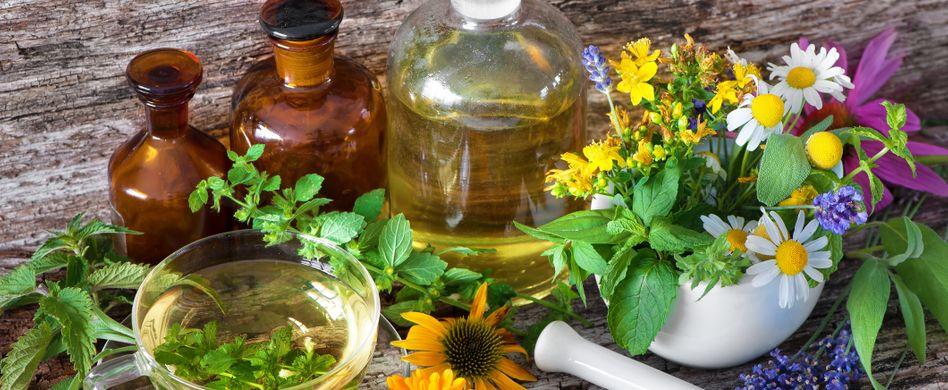 Heilpflanzen-Wissen: Von Aloe vera bis Thymian