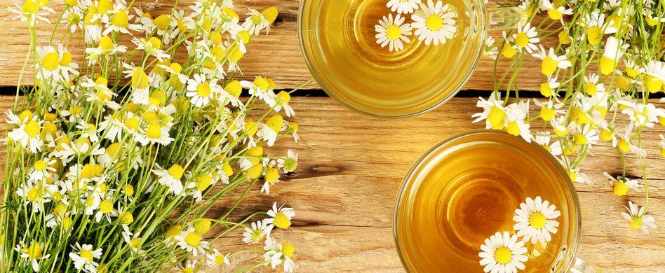 Heilpflanze Kamille: Beruhigt den Magen