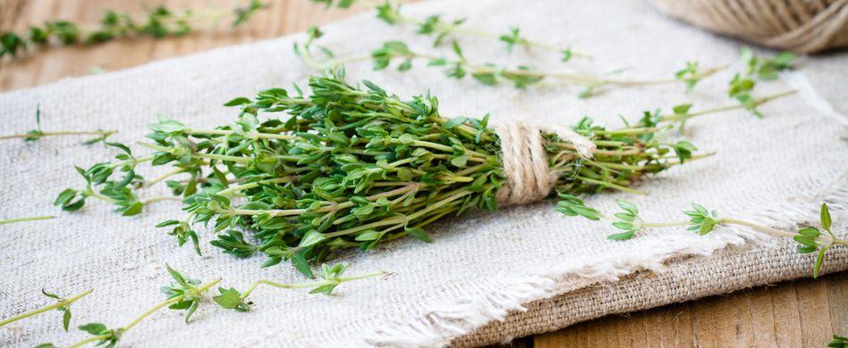 Heilpflanze Thymian: Hilft bei Erkältung