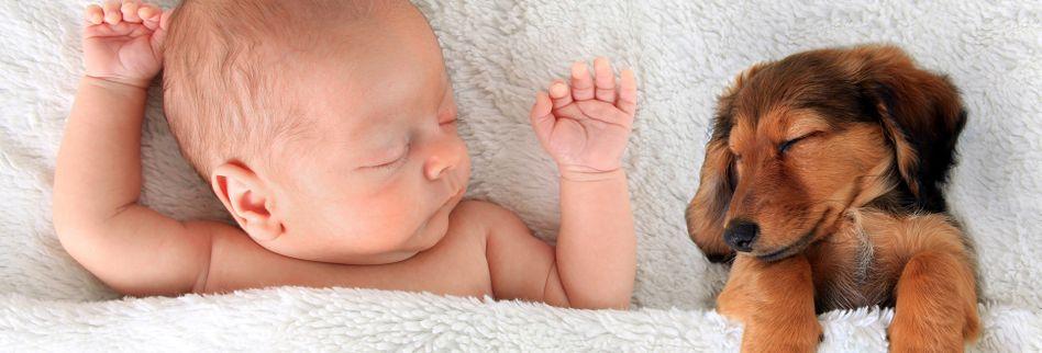 6 Dinge, worin sich Welpen und Kleinkinder kaum unterscheiden