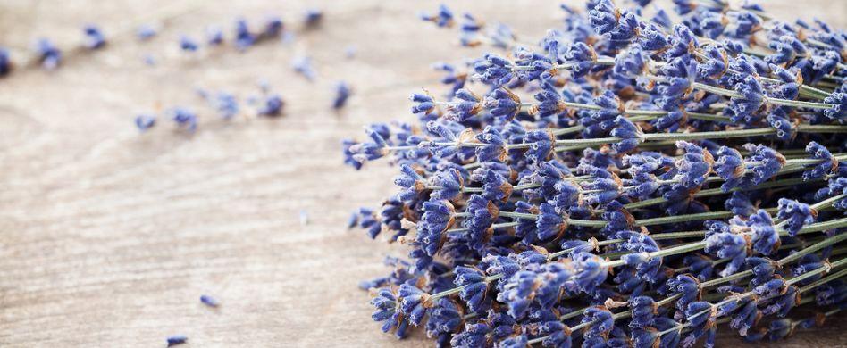 Abnehmen mit Lavendel: So hilft der aromatische Duft