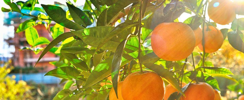 Haben Mandarinen viele Kalorien? 3 Fakten zum Weihnachtsobst