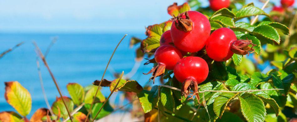 5 heimische Lebensmittel mit besonders viel natürlichem Vitamin C