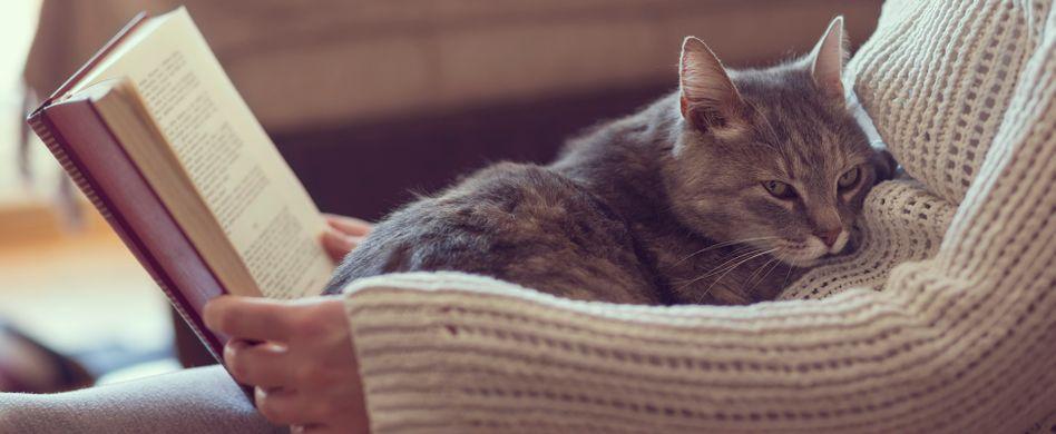 Katzen, Kuchen und Co. – 5 ungewöhnliche Videos zur Entspannung