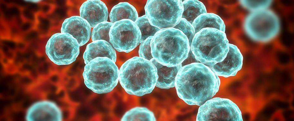 Was sind eigentlich Chlamydien?