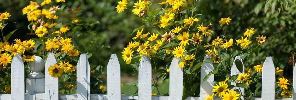 Zaun zum Nachbarn: Wie hoch darf er sein und wer muss ihn bauen?