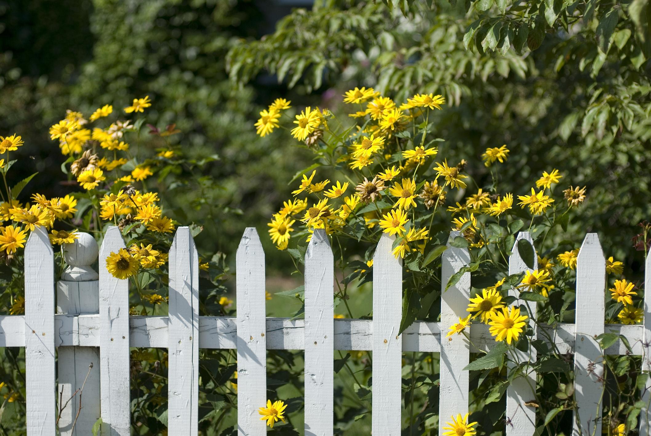 Zaun zum Nachbarn Wie hoch darf ein Zaun sein