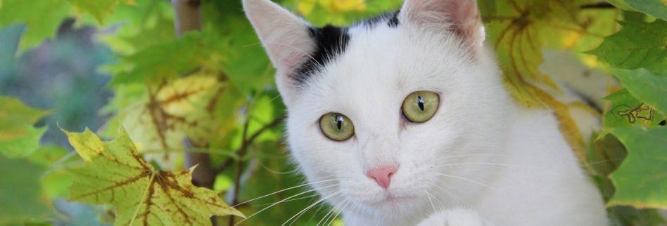 Fremde Katzen im Garten: Können Nachbarn sich wehren?