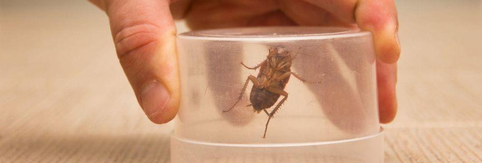 Schädlinge im Haus bestimmen und bekämpfen