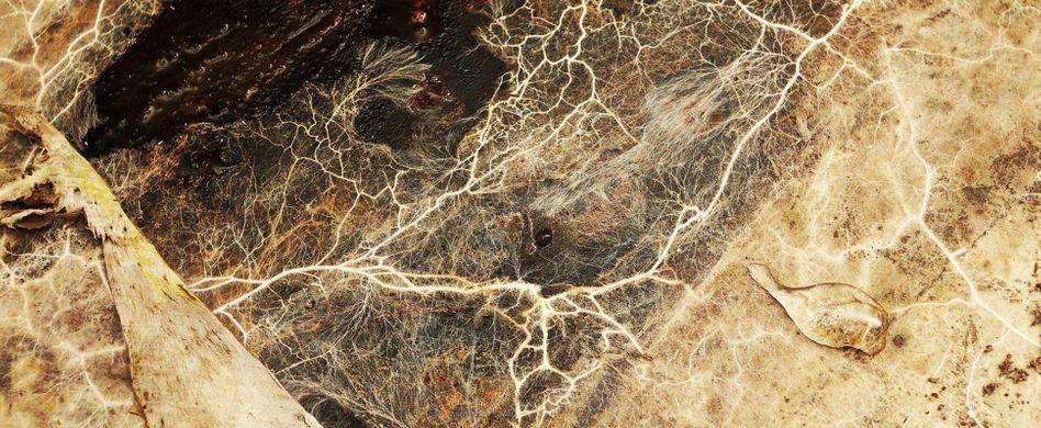 Hausschwamm bekämpfen: So werden Sie den Pilz los