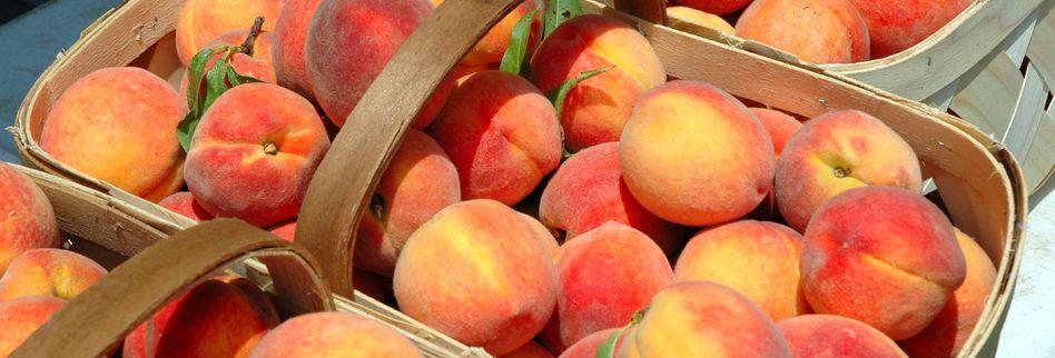 Pfirsiche ernten und richtig lagern