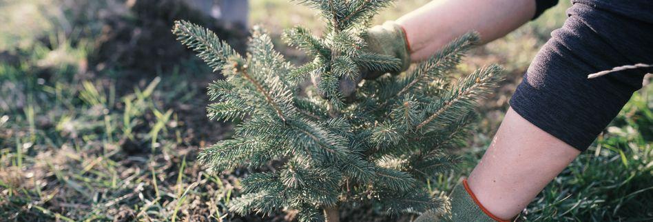 Tipps für einen nachhaltigen Weihnachtsbaum