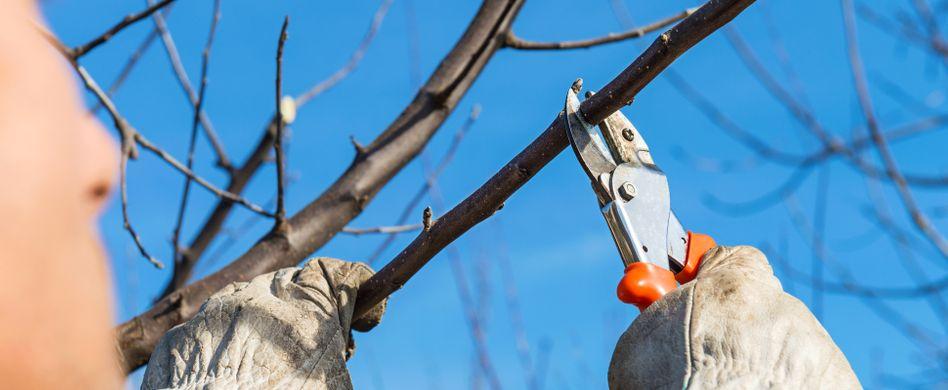 Gartenarbeit im Februar: Diese 3 Arbeiten liegen an