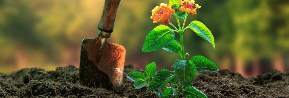 Darum sollten Sie mit torffreier Blumenerde gärtnern