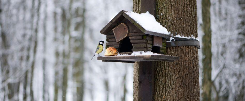 Nistkasten aufhängen: Ein kuscheliger Platz für Vögel