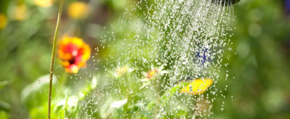 Garten im Juni: Diese Gartenarbeiten liegen an