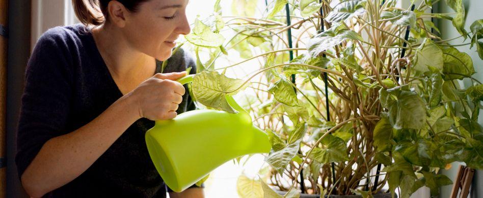 Warum Sie mit Ihren Pflanzen sprechen sollten