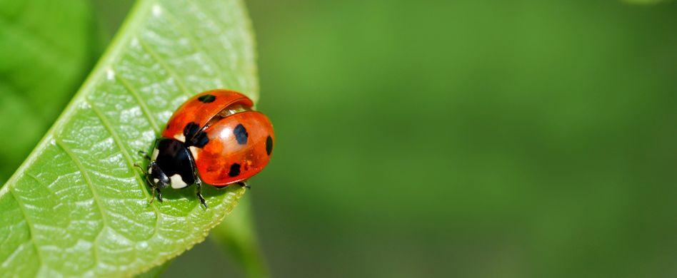 Pflanzenschutz: 5 umweltschonende Maßnahmen für Ihren Garten