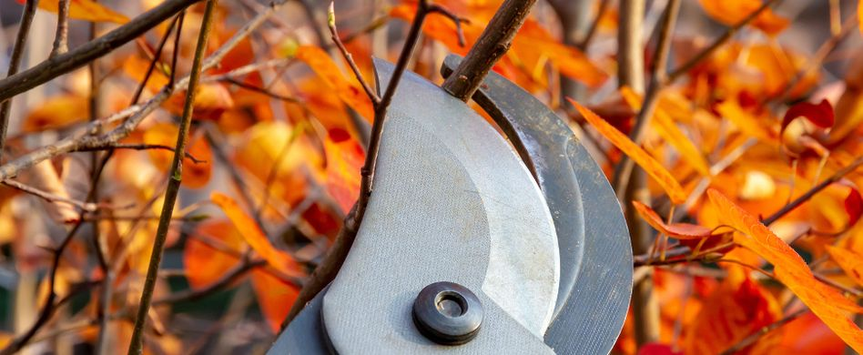 Sträucher schneiden: Welche im Herbst dran sind und wie es geht