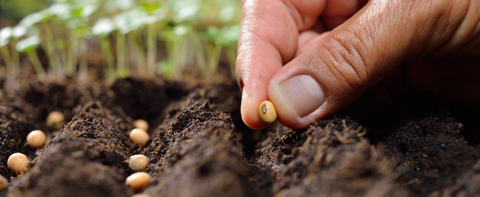 Welches Gemüse wann anpflanzen?