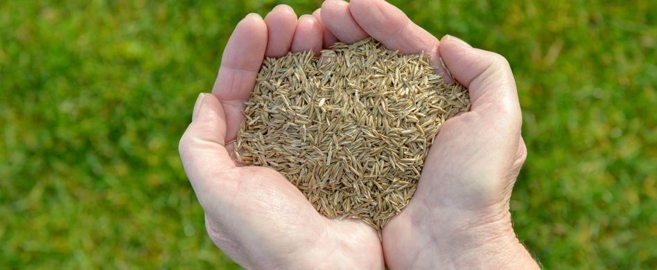 Rasen selber aussäen: Schritt für Schritt zum perfekten Grün