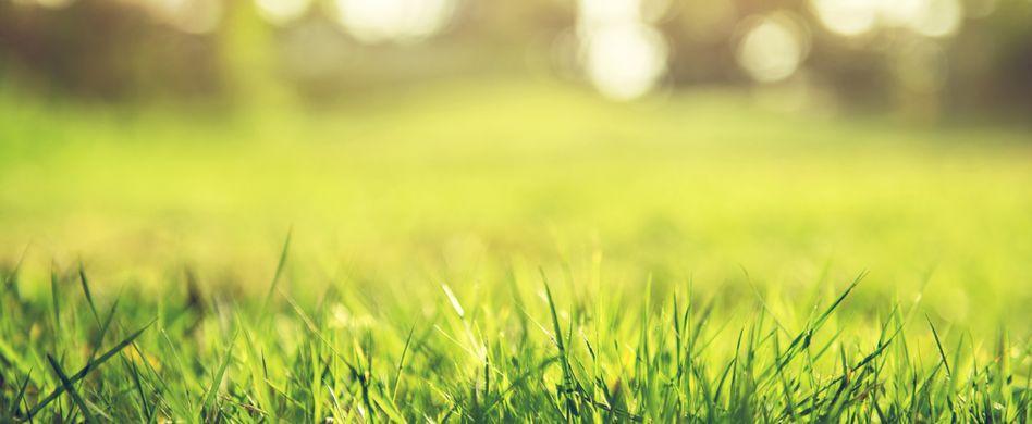Rasen vertikutieren und lüften: So geht's richtig