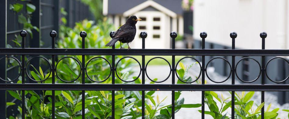 Gartenzaun kaufen: Mehr als nur ein Sichtschutz für den Garten