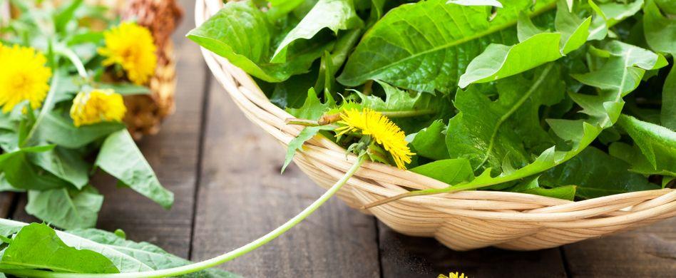Essbare Blumen: Diese 5 Pflanzen können Sie essen!