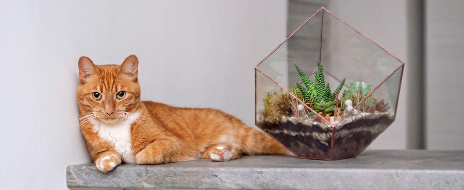 Ein Kaktus ist besser als eine Katze! 5 Gründe, warum das so ist