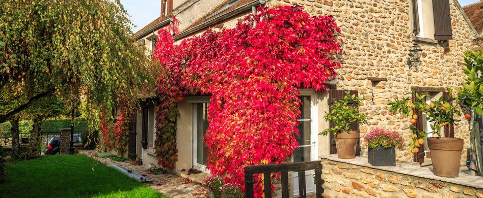 Fassadenbegrünung: Vorteile und Tipps zur Planung