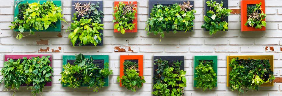 Vertikaler Garten: Selber bauen leicht gemacht – so einfach pflanzen Sie senkrecht
