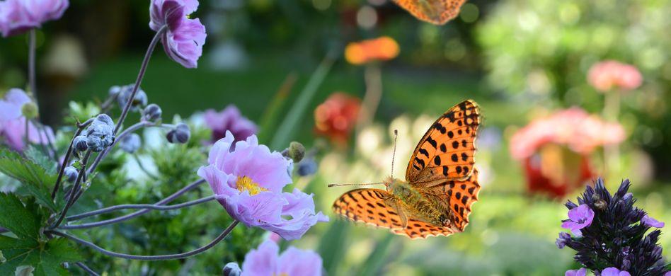 Heimische Schmetterlinge: So schön und vielfältig ist die Tagfalter-Welt in Deutschland