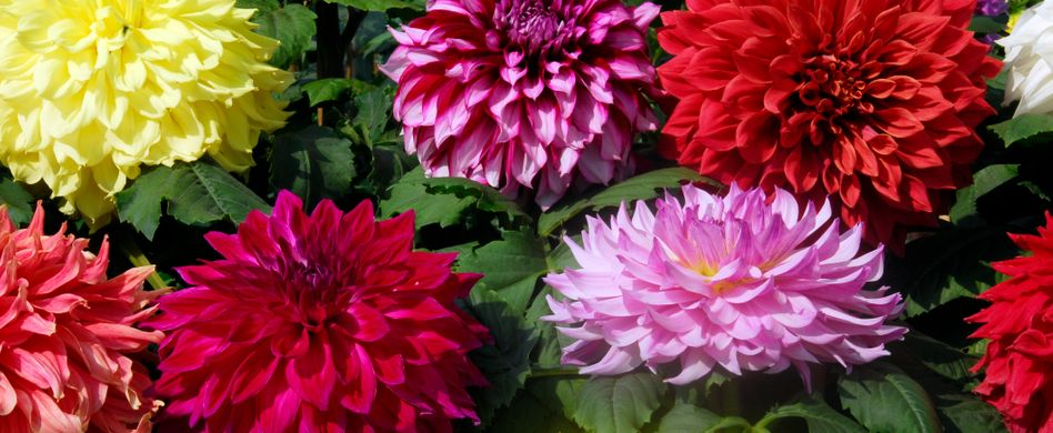 Herbstblüher: Diese 5 Pflanzen blühen im Herbst