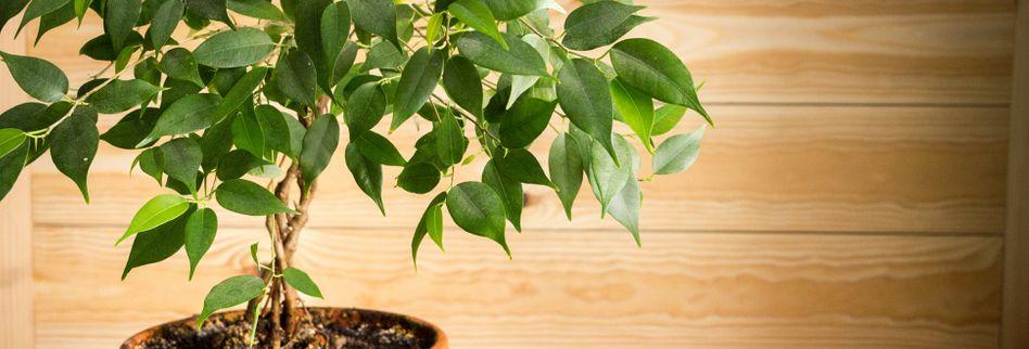 Wenn Pflanzen reden könnten: 5 Gedanken einer Büropflanze