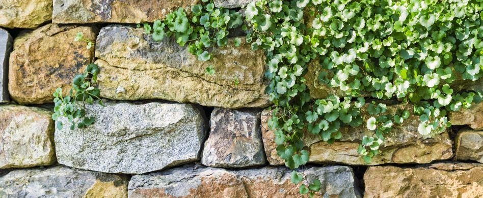Gartenmauer gestalten: 25 wunderschöne Ideen für den Gartentraum