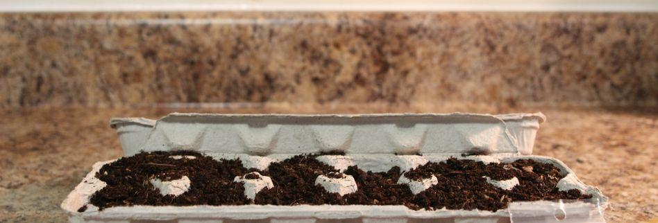 Anlage des Kräutergartens: So pflanzen Sie Ihre Kräuter richtig