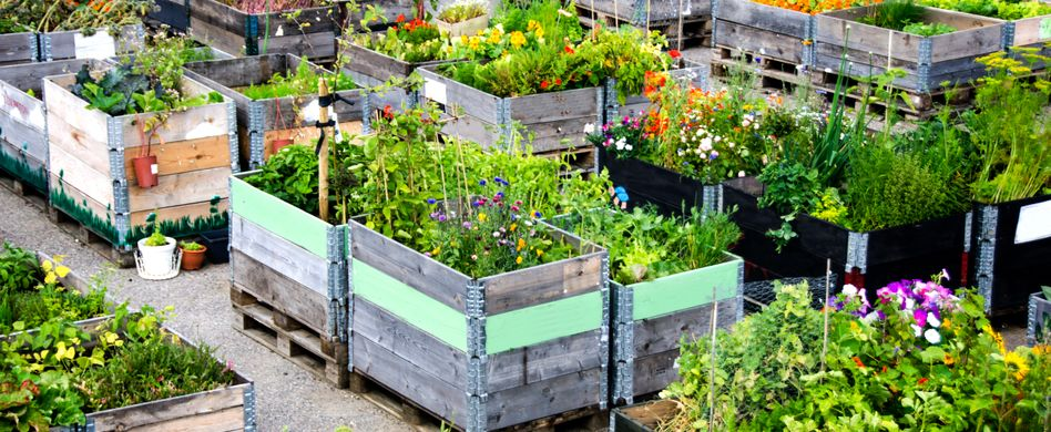 Urban Gardening: 5 tolle Ideen für Stadtgärtner