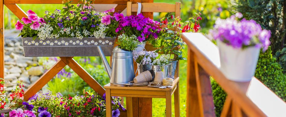 Pflanzen für den Südbalkon: Diese Gewächse mögen es sonnig